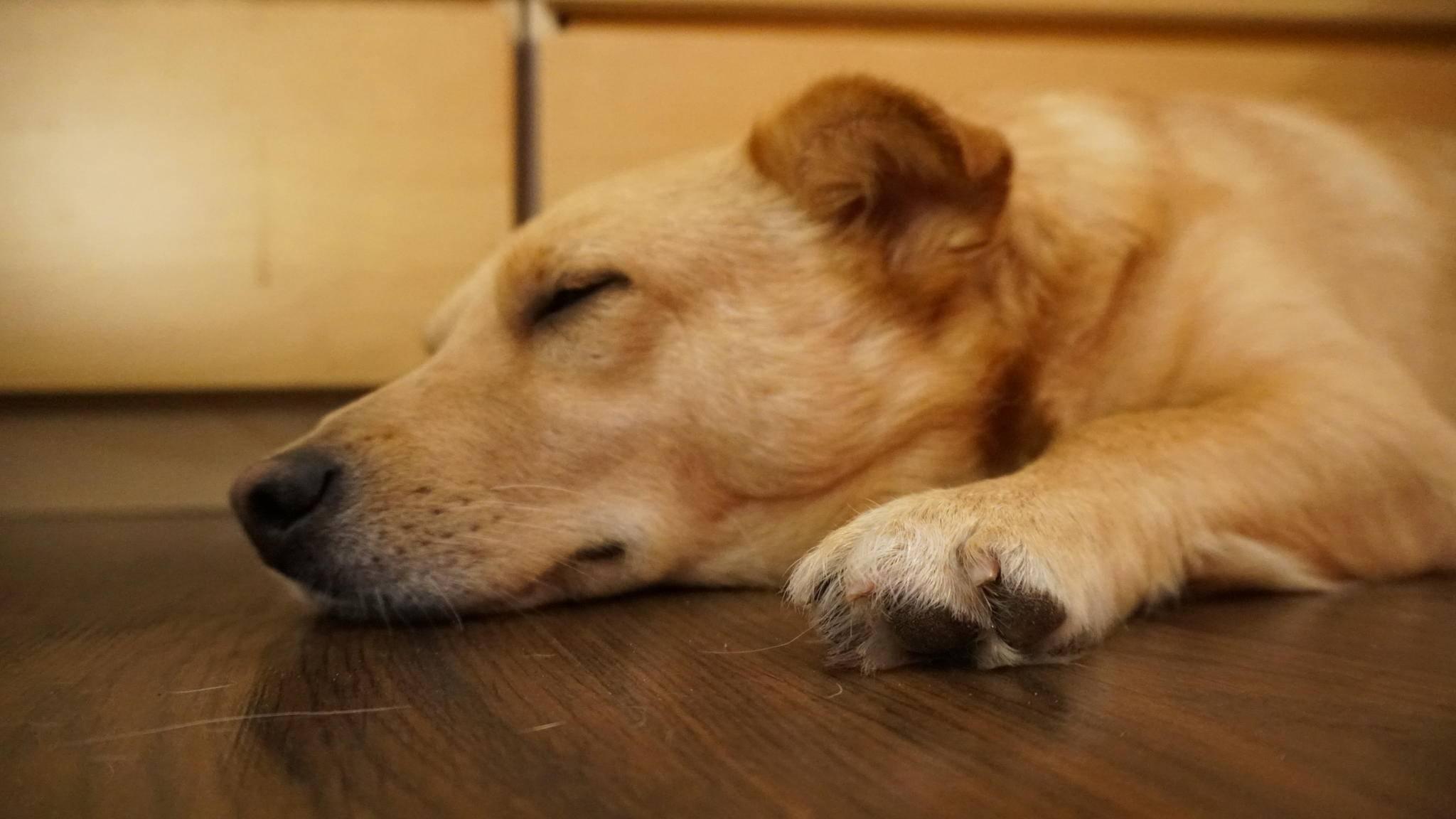 Oskar schläft