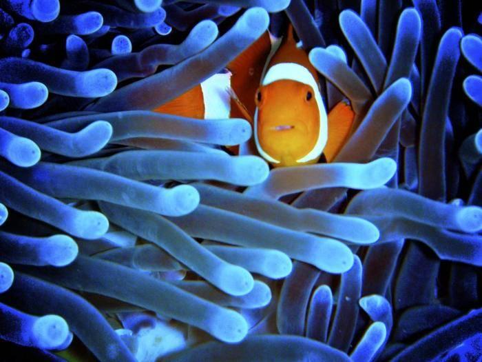 Beeindruckende Unterwasserfotos sind tolle Urlaubserinnerungen.