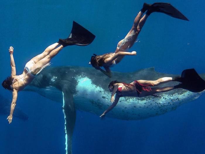 Der Tauchgang mit einem Wal muss natürlich mit einer GoPro festgehalten werden.