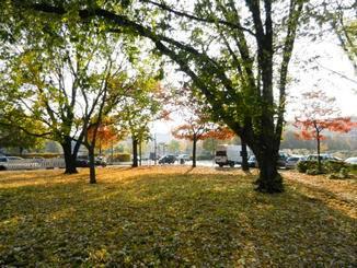 Beim Herbstspaziergang durch Berlin ist die Basis Peak auf Schritt und Tritt dabei.
