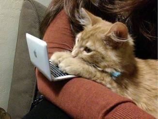 """""""Dann muss ich halt selber Katzenfutter bestellen."""""""