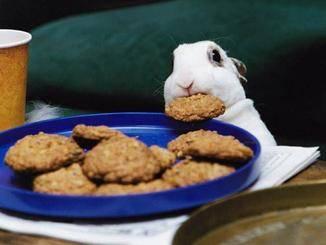 """""""Und Kekse! Wir brauchen bald neue Kekse, ..."""""""