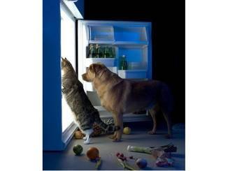 """""""Zeit wird's! Im Kühlschrank ist nur noch Gemüse..."""""""