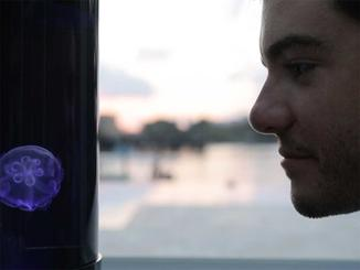 Kickstarter: Jellyfish Aquarium