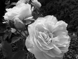 ... oder in Schwarz-Weiß.