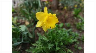 Nahe Motive wie Blumen werden vor einem unscharfen Hintergrund betont.