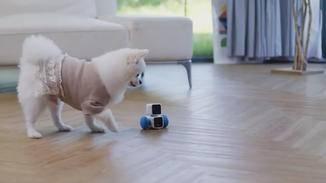 Artibo spielt auch mit Deinem Hund.