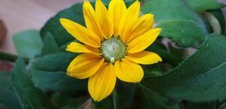 ... oder Pflanzen erkennt und die Fotoeinstellungen entsprechend anpasst.
