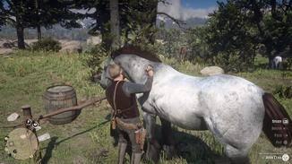 Striegeln fördert die Verbundenheit zwischen Dir und Deinem Pferd.