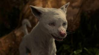Der Wolf-Albino Booth wird zu Moglis Vertrautem, ...
