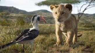Gleich erwartet Simba eine ordentliche Standpauke.