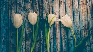 Im Frühling erwacht die Natur – herrlich!