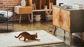 Play 2 ist vor allem für Katzen eine Freude, die immer wieder hinter dem Laser herjagen können.