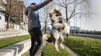 PitPat Hundetracker
