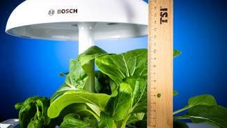 Bosch SmartGrow Pflanzen Höhe