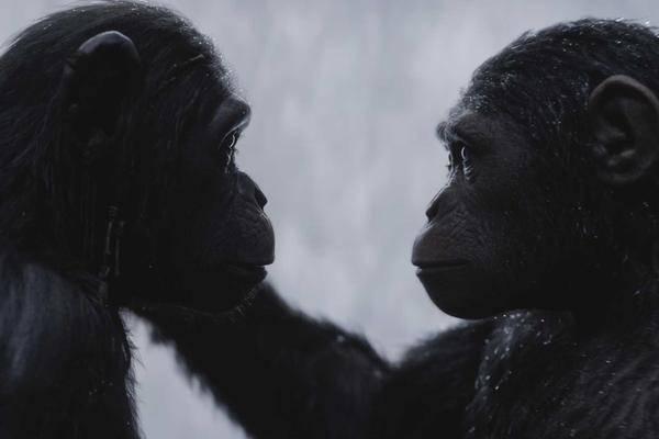 -Planet-der-Affen-Die-Filme-in-der-richtigen-Reihenfolge-gucken