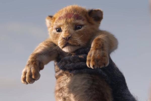 König Der Löwen Pc Spiel