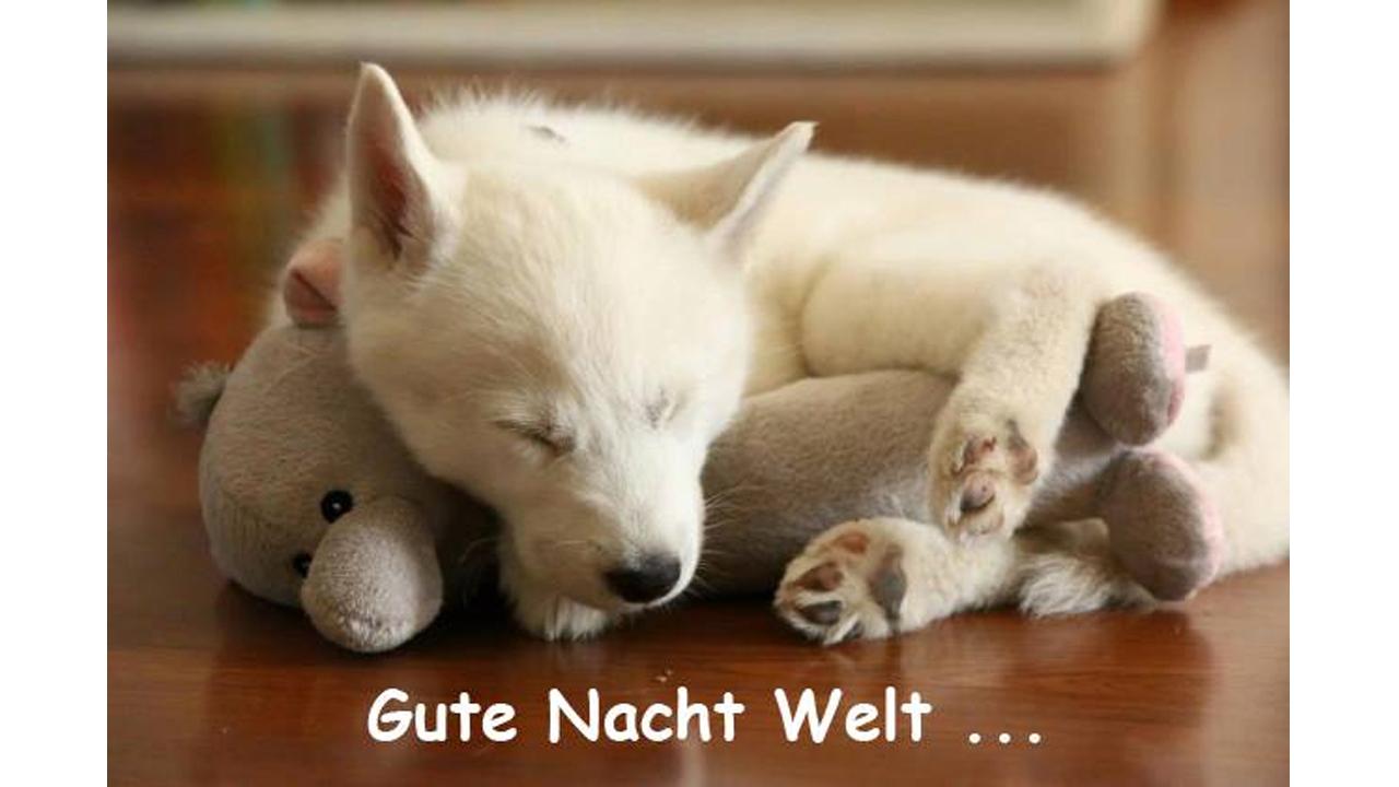 Gute Nacht Bilder Fur Whatsapp 45 Kostenlose Lustige Bilder
